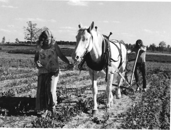 Ch 3 horse, womkan in field