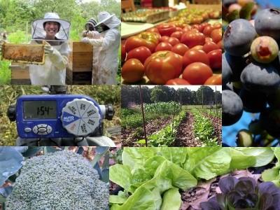 The Organic Gardening & Beekeeping Intensive: June 14-18
